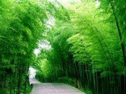 Nuta Green